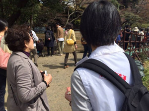 Koraku_hanami_2_20150514_800_2