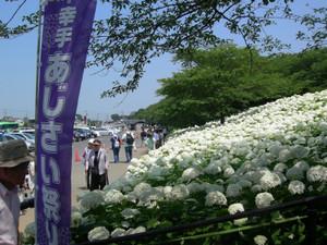 Midori_komagome_201706_800